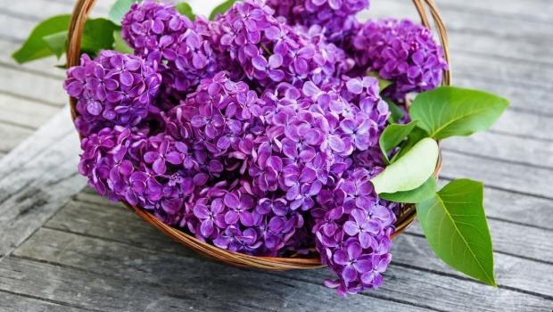 Dulceață din flori de liliac