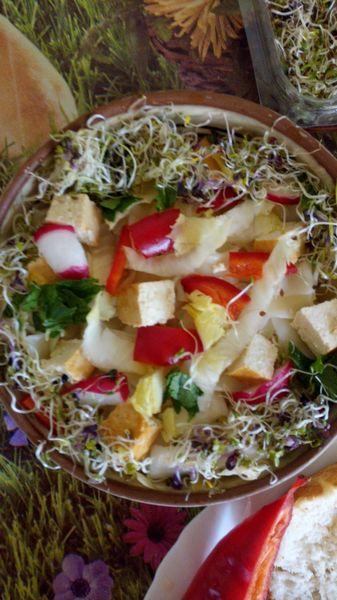 Paste cu tofu, andive, germeni mix de mustar, gulie, rapita,   iaurt de caju si parmezan vegan